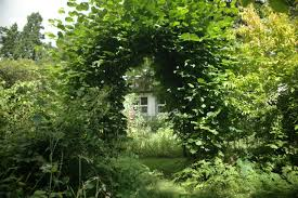 garden arch of bushes